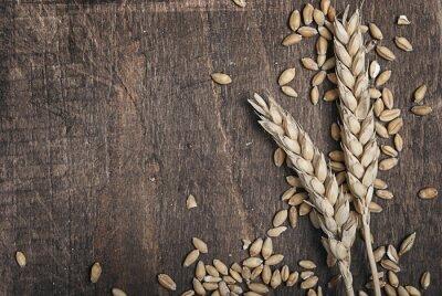 Obraz Kłosy pszenicy