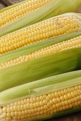 Obraz kolby kukurydzy