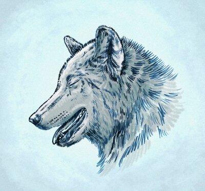 Obraz Kolor tuszu narysować wilka grawerować ilustracja