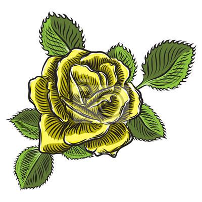 Kolor żółty róża z zielonymi liśćmi odizolowywającymi na białym tle. Element projektu karty z pozdrowieniami i zaproszenie na ślub, urodziny, Walentynki, dzień matki. Wektor.