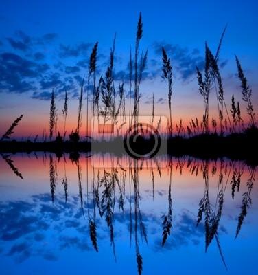 kolorowe zachód słońca nad podmokłych