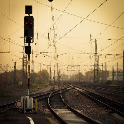 Obraz Komórka sepii mylące utworów zmierzchu rail