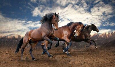 Obraz konie dziki skok laurowe