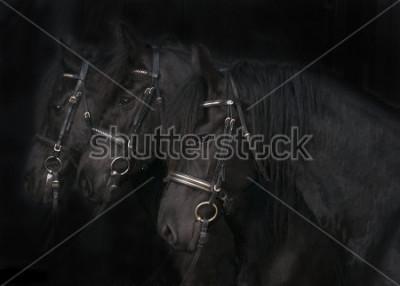 Obraz Konie fryzyjskie