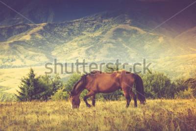 Obraz Konie pasą się w górach. Jesień krajobraz. Przefiltrowany obraz: efekt przetworzony krzyża w stylu vintage.
