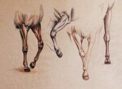Obraz końskie nogi badania