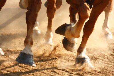 Obraz Kopyta koni uruchomione