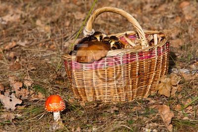 Kosz z grzybów w lesie