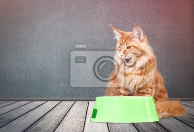 Kot Obrazy Na ścianę Obrazy Szary Futrzany Futro Myloviewpl