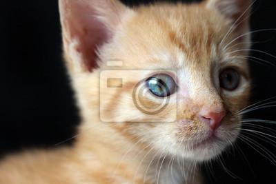 Kot Obrazy Na ścianę Obrazy Wąs Puszysty Kotek Myloviewpl
