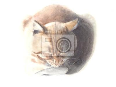Kot śpi kot portret akwarela ilustracji samodzielnie na białym tle