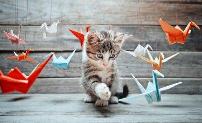 Obraz Kotek bawi się z papierowych żurawi