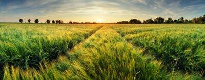 Obraz Krajobrazu wiejskiego z pola pszenicy na zachód słońca