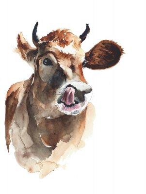 Krowa portret głowy akwarela ilustracji samodzielnie na białym tle