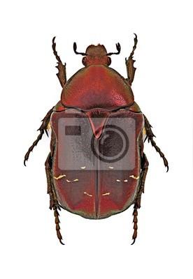 Obraz Kruszczyca okaz - czerwony formularz