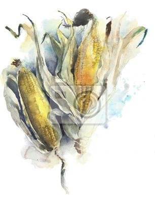 Kukurydza kolby kukurydzy akwarela ilustracji samodzielnie na białym tle