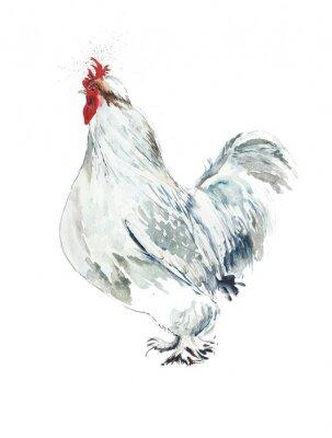 kura kurczak akwarela Illustratio na białym tle