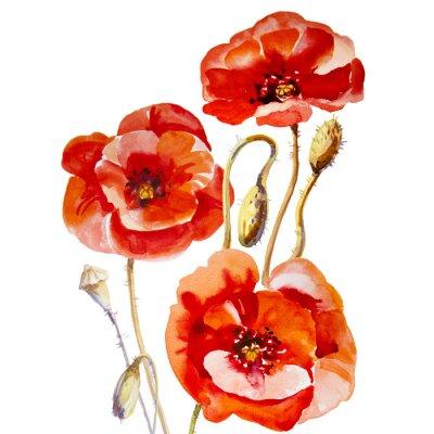 Obraz Kwiat pole makowe