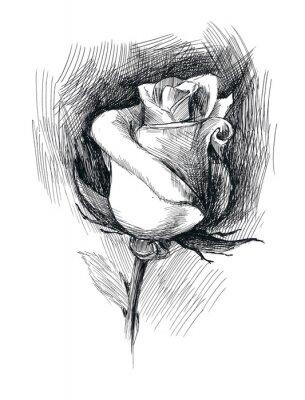 Obraz kwiat szkic