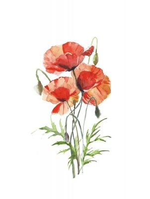 Kwiaty czerwone maki wiosenny kwiat wiązka akwarela ilustracji samodzielnie na białym tle