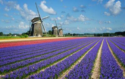 Obraz Kwiaty i wiatraki w Holandii
