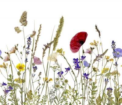 Obraz kwiaty i zioła