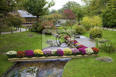 Kwiaty na potoku w Ogrodzie Japońskim, Hasselt, Belgia