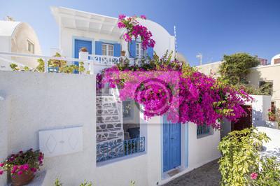 kwiaty wystrój w pobliżu domu na Santorini