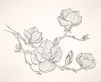 Obraz kwitnących magnolii