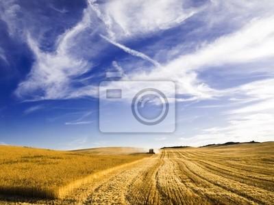Łączenie zbiorów na polu pszenicy