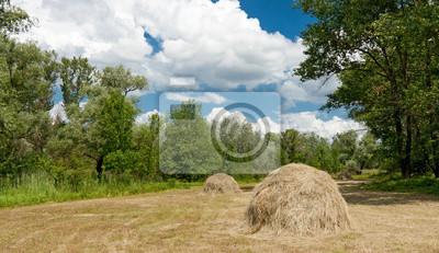 Łąka, las z stogi