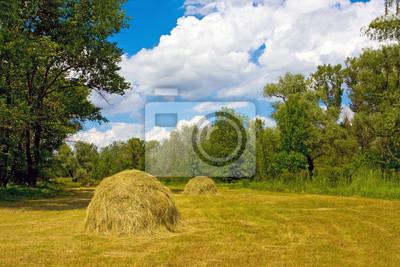 Łąka z haystaks