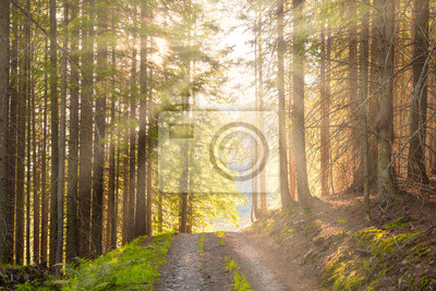 Landscape with road in the green forest and rays of sun light