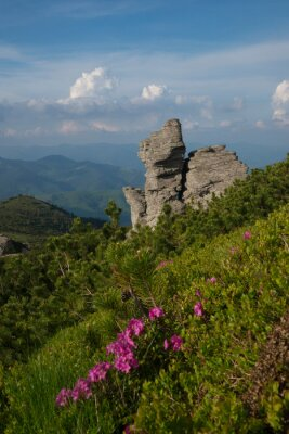Landscape with rock and pink flowers