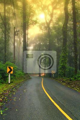 Las drogowego na początku mglisty poranek z widocznych promieni słonecznych.
