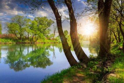 Obraz las rzeka z kamieni i trawy o zachodzie słońca
