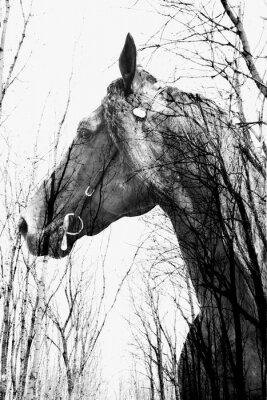 Obraz Las wewnątrz ina koń sztuki, multiexposition