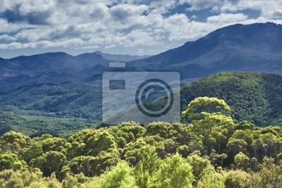 lasów tropikalnych australia