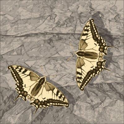 Obraz Latający motyl ponad grunge ścianie.