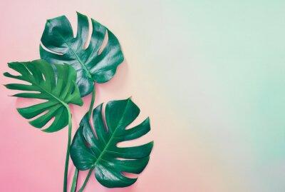 Obraz Lato tropikalny tło