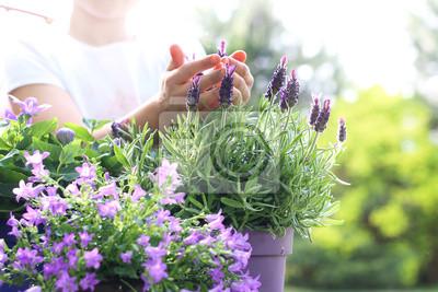 Obraz Lawenda, fioletowa Kompozycja Kwiatowa