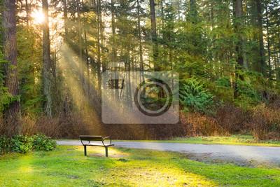 Ławka w parku miejskim zielonym