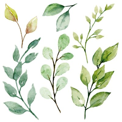 Obraz Leaves watercolor set. Hand painting floral illustration. Green leaf, plants, foliage, branches isolated on white background.