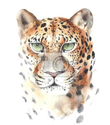 Leopard duża głowa kota portret akwarela ilustracji samodzielnie na białym tle