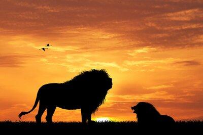 Obraz Lew sylwetka o zachodzie słońca