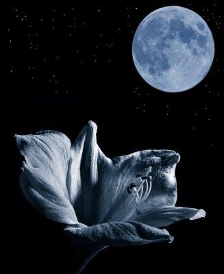 Obraz Lilly i księżyc
