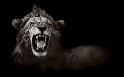 Obraz Lion wyświetla niebezpiecznych zębów