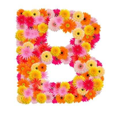 Obraz Litera B alfabet z Gerbera na białym tle