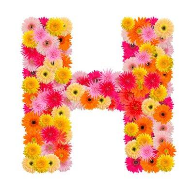 Obraz Litera H alfabet z Gerbera na białym tle