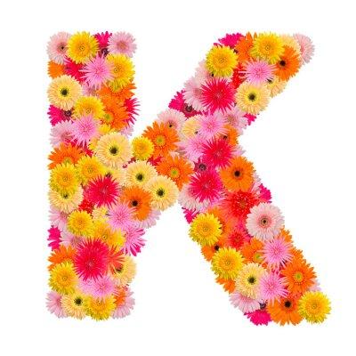 Obraz Litera K alfabet z Gerbera na białym tle
